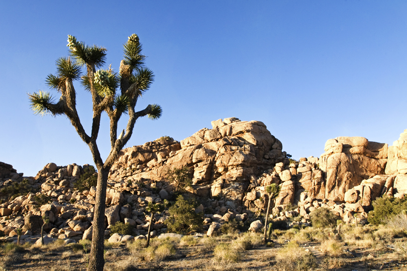 Joshua Tree Photo Locations