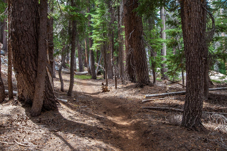 trail-forest-high-sierra-camp