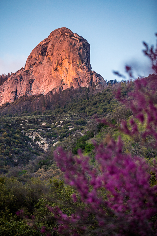 Sequoia-National-Park-Trees-Purple-Morro-Rock