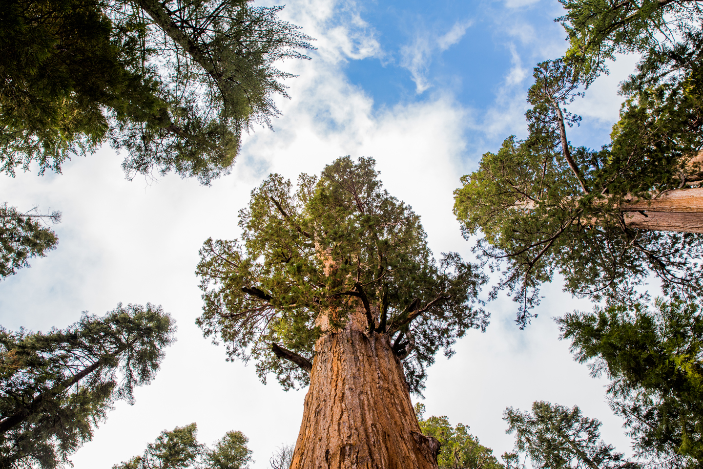 Sequoia-National-Park-Trees-Sky-Sherman
