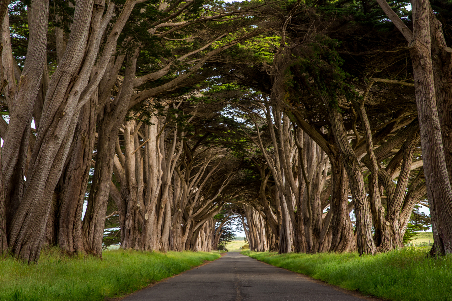 Point-Reyes-Cypress-Tunnel--Julie-Boyd-Photography