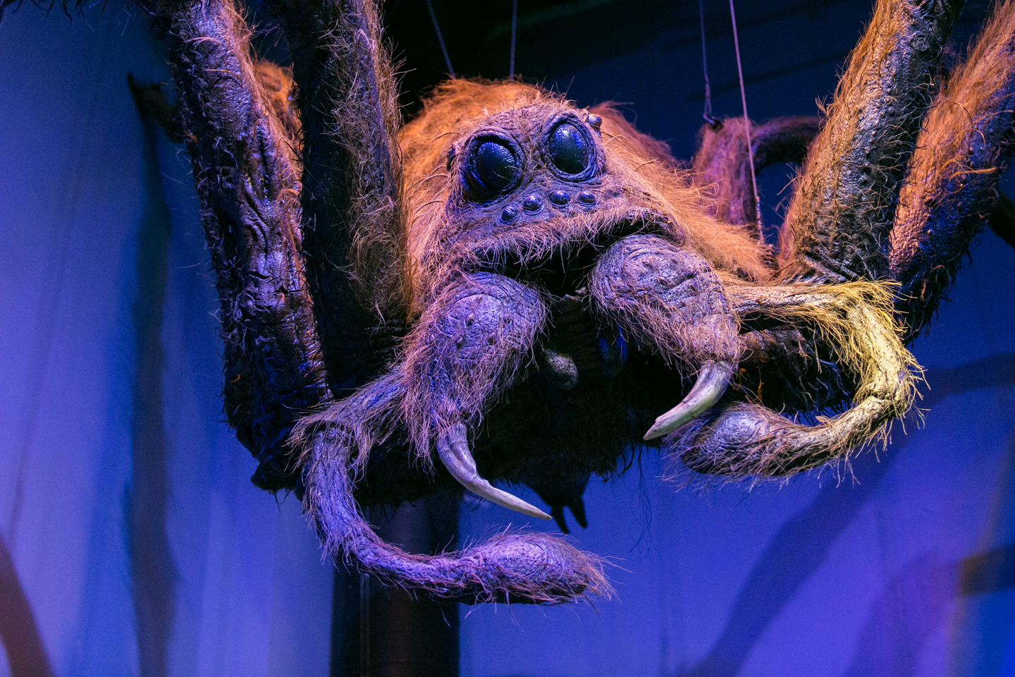 harry-potter-studio-tour-aragog