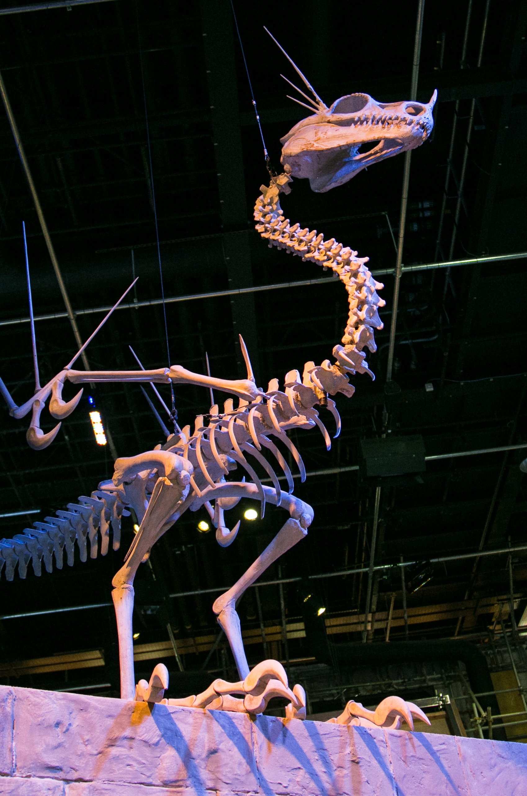 harry-potter-studio-tour-dragon-skeleton