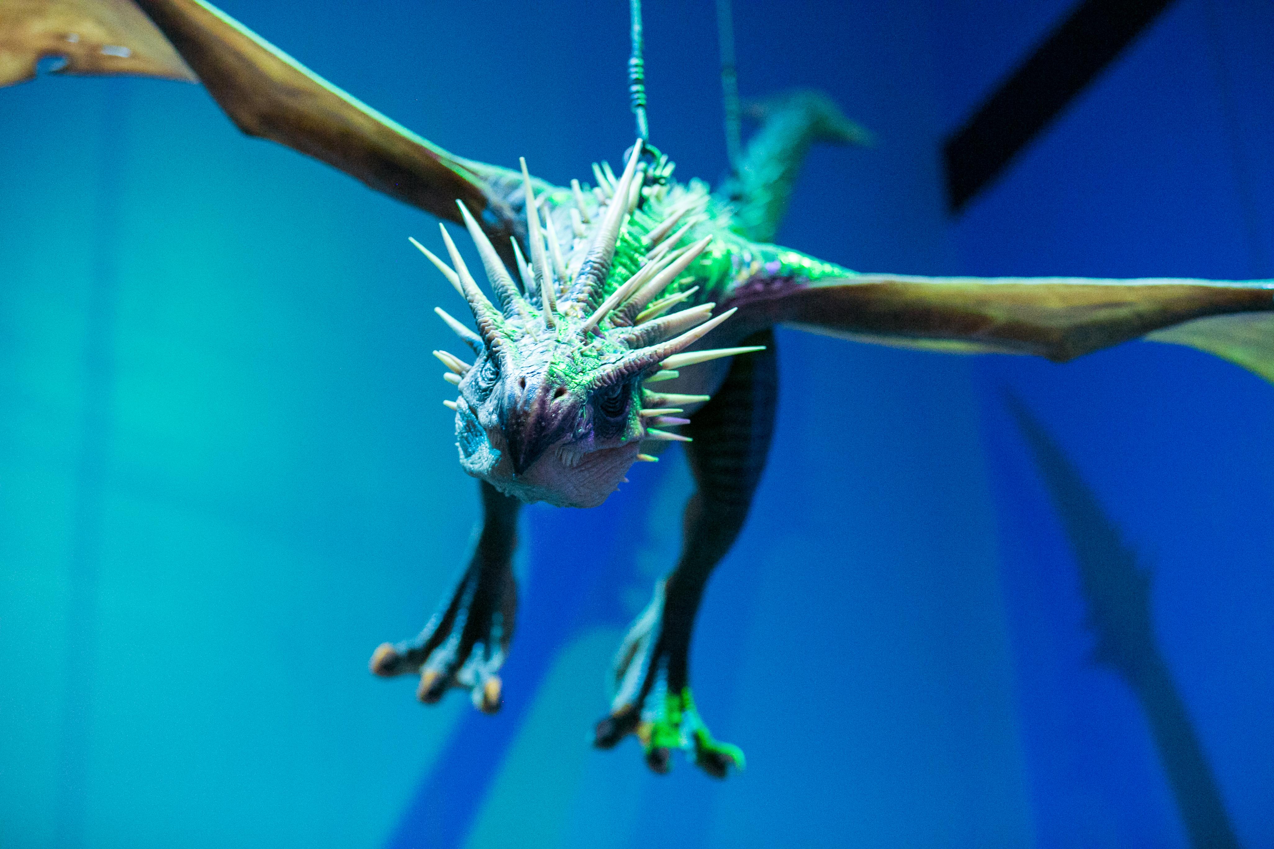 harry-potter-studio-tour-dragon