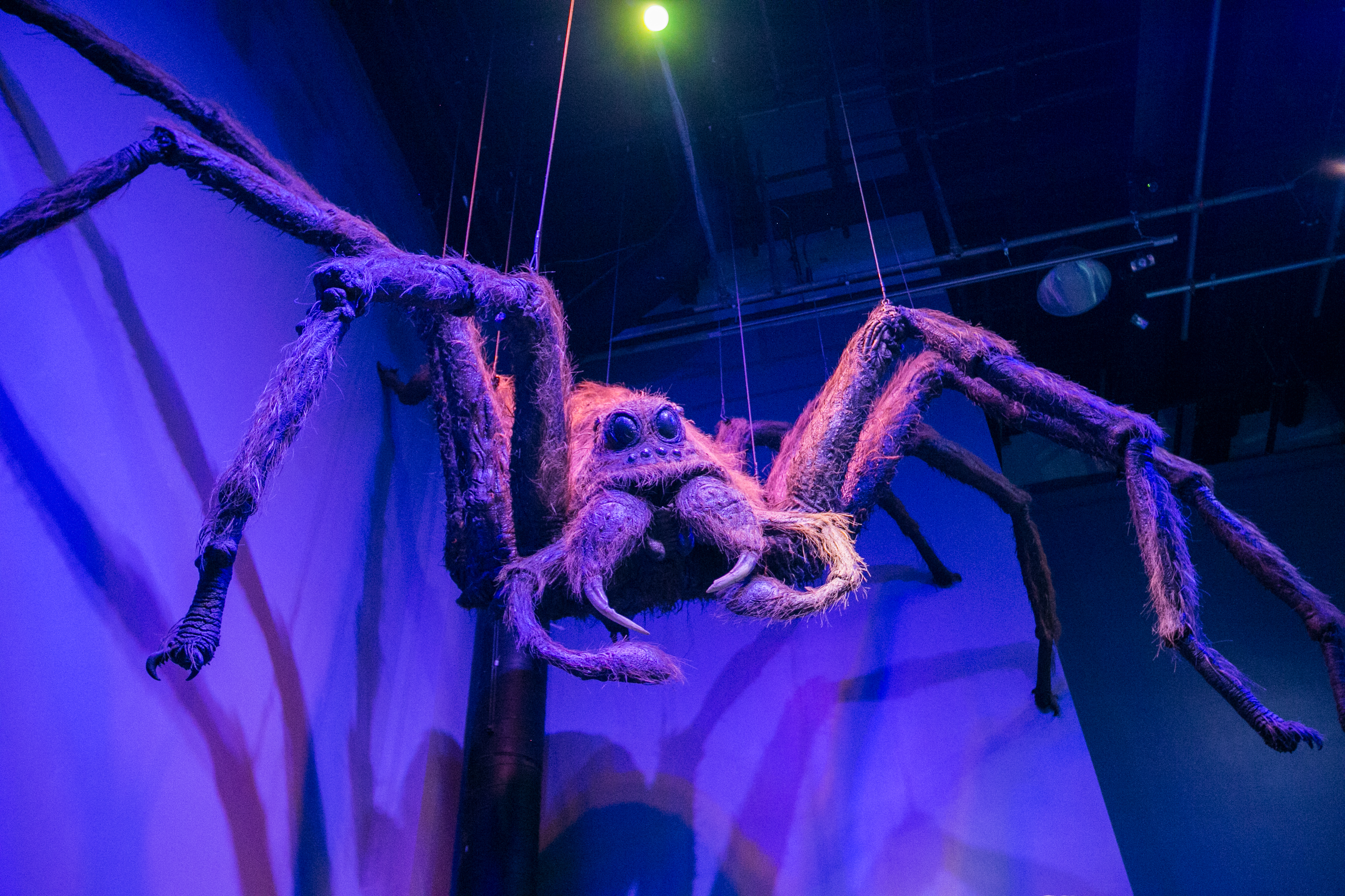 harry-potter-studio-tour-spider-aragog