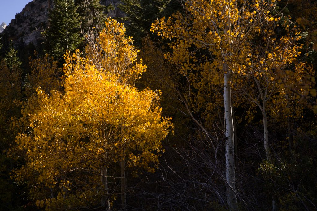 Fall Colors Eastern Sierras Bridgeport