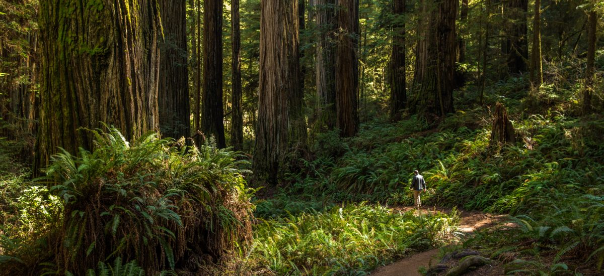 A Weekend Road Trip to Redwood National and State Parks