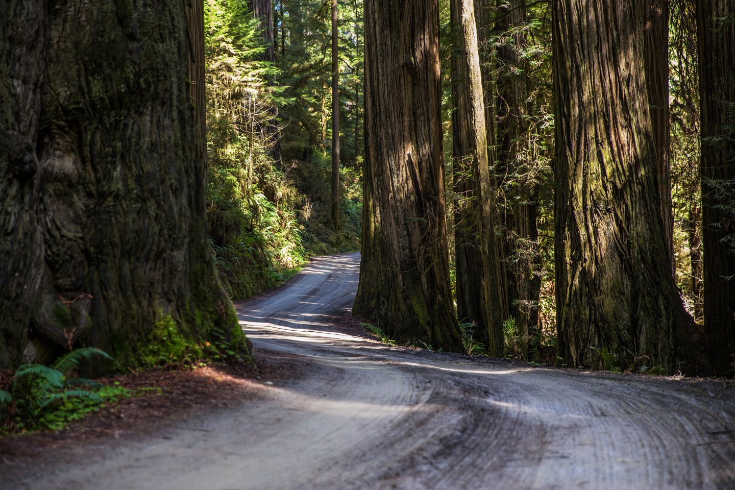 a weekend road trip to redwood national and state parks. Black Bedroom Furniture Sets. Home Design Ideas