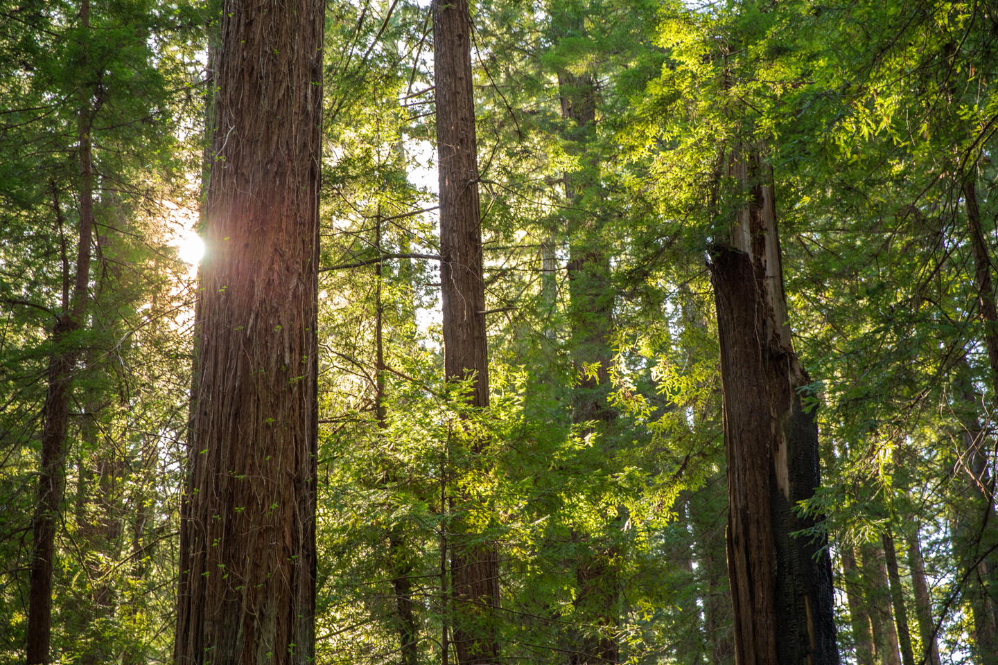 Road Trip to Redwood National and State Parks