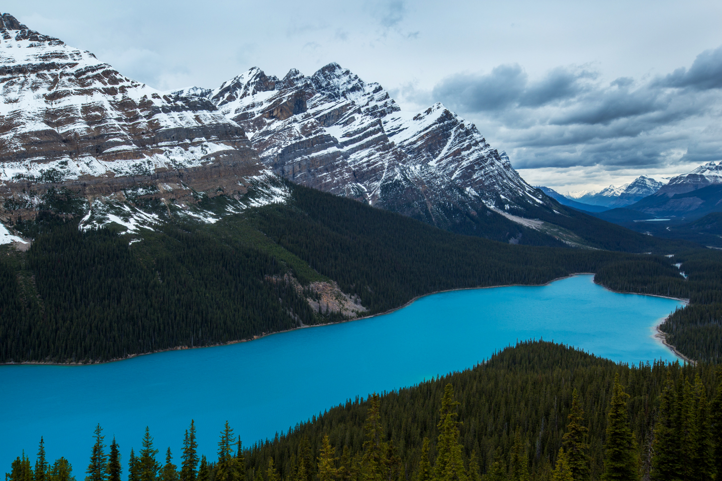 Shore of Peyto Lake
